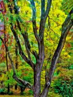 Black Walnut in Autumn. Photograph by Dan Mangan