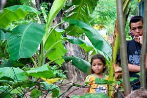 Under the Banana Tree. Photograph by Dan Mangan
