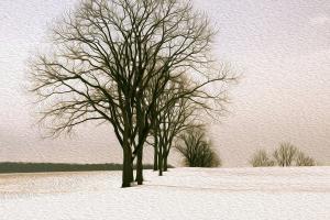 Onion Snow, Early April. Photograph by Dan Mangan