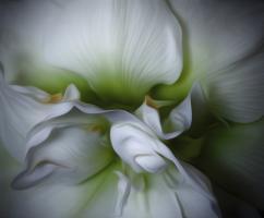 Vanilla and Mint Swirl