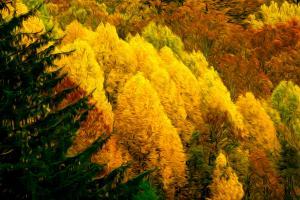 Flaming October, Appalachian Foothills. Photograph by Dan Mangan