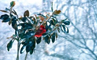 Into the Winter Wind: Northern Cardinal. Photograph by Dan Mangan