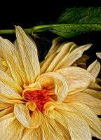 Yellow Dahlia and Leaf