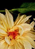 Yellow Dahlia and Leaf
