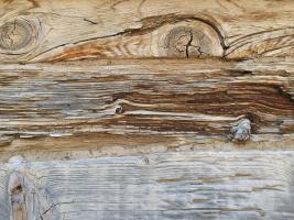 Desert Wood 8