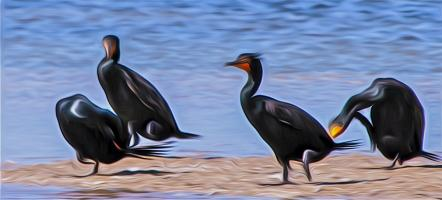 Languid Noon: Double-Crested Cormorants. Photograph by Dan Mangan