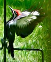 Pileated Woodpecker. Photograph by Dan Mangan