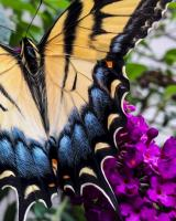 Papillon II. Photography by Dan Mangan