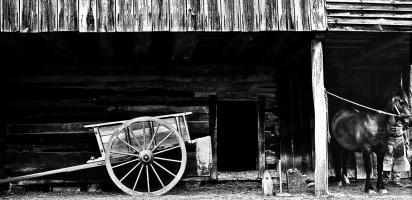 Farm Wagon and Bay Horse
