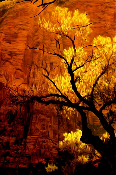 Cottonwood at Daybreak, Desert Southwest. Photograph by Dan Mangan