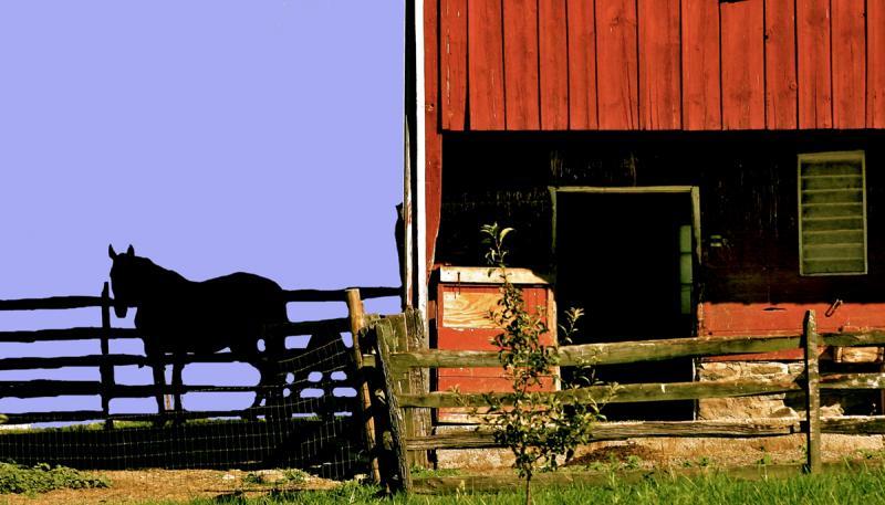 Klingel Barnyard. Photograph by Dan Mangan