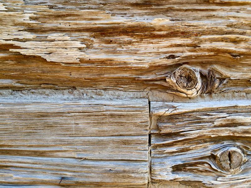 Desert Wood 4