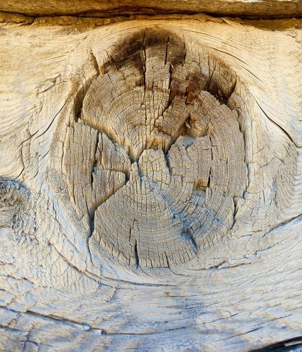 Desert Wood 2