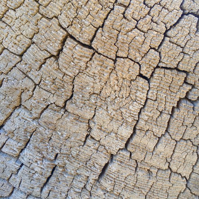 Desert Wood 5