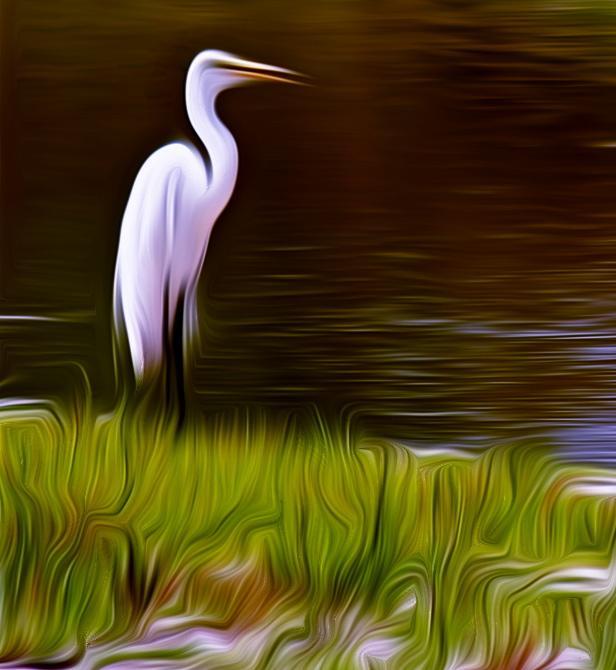 Great Egret in Tall Marsh Grass