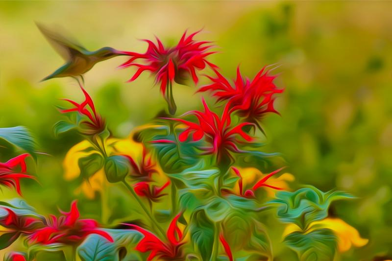 Ruby-Throated Hummingbird on Bee Balm. Photograph by Dan Mangan