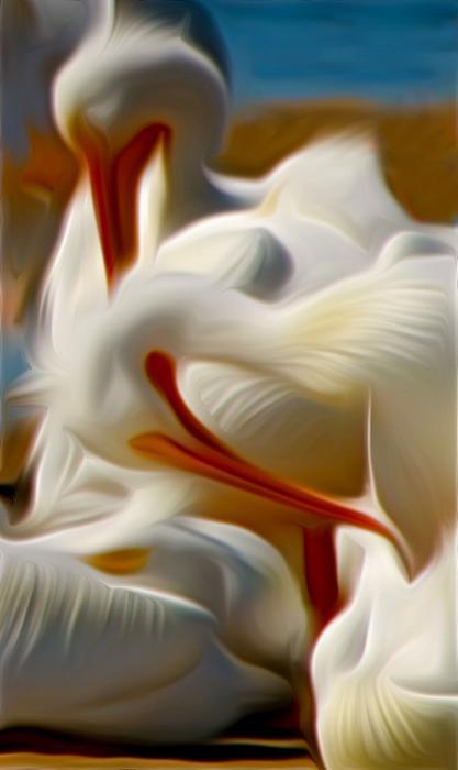 White Pelicans in Repose. Photograph by Dan Mangan