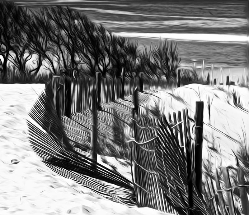 Dune Fence, Cape Henlopen