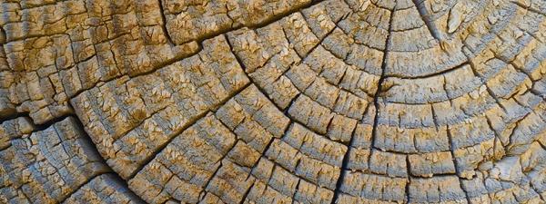 Desert Wood 1